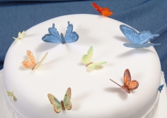 Butterflies, Ladybirds and Bees