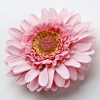 Gerbera Flower Set